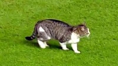 O pisica a intrerupt un meci in Premier League (Video)