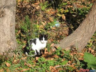 O pisica a supravietuit doua luni intr-o canapea si unei calatorii de 6.000 de km