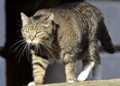 O pisica spion in Guvernul de la Londra?