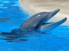 O plaja intreaga a fost inchisa in Franta din cauza unui delfin frustrat sexual