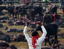 O sarbatoare inecata in sange: Cel mai mare macel al animalelor
