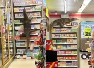 O soparla uriasa se urca pe rafturi. Imagini socante dintr-un magazin din Thailanda VIDEO
