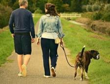 O universitate din Marea Britanie a primit bani ca sa ii ajute pe studenti sa se relaxeze in sesiune plimband caini