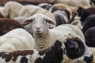 """ONG de mediu, după ce parlamentarii USR au blocat legea care interzicea exportul cu animale vii: """"USR se dovedeşte astăzi mai rău decat PSD. Ruşine"""""""