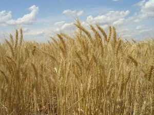 Oamenii de afaceri straini investesc in agricultura romaneasca