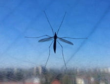 "Oamenii de stiinta avertizeaza: ""Super malaria"", imuna la tratamentele clasice, se raspandeste alarmant de repede"
