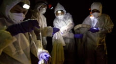 Oamenii de stiinta din Wuhan au recunoscut ca au fost muscati de lilieci infectati cu Covid-19. O echipa a OMS a demarat o ancheta in China