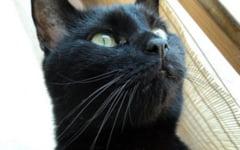 Oamenii si atractia fata de pisici. De ce au concluzionat expertii ca introvertitii sunt mult mai atrasi de feline