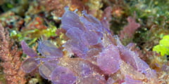 Obama declara cea mai mare rezervatie naturala marina din lume: E de 2 ori cat Franta