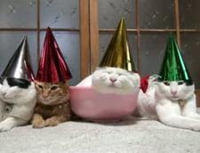 Obosite dupa petrecerea de Craciun