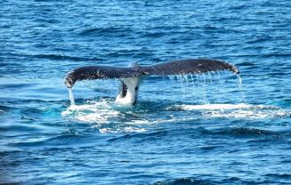 Oceanele pierd oxigenul intr-un ritm fara precedent. Cu ce implicatii si care sunt cele cateva specii care vor prospera