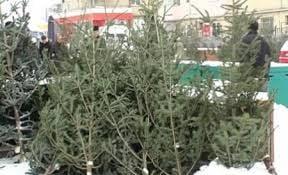 Oferta saraca de brazi la Giurgiu, la inceput de decembrie