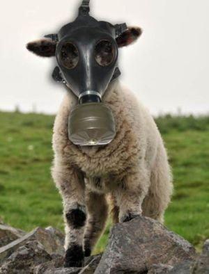 Oile australiene vor purta masti de gaze
