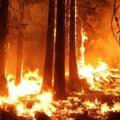 Omenirea este condamnată: Se produce extincția globală în masă, anunță cercetătorii din Suedia