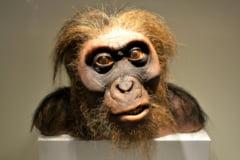 """Omul de Neanderthal auzea la fel de bine ca """"varul"""" sau Homo sapiens. Rezultatele unui studiu de la Universitatea din Alcala"""