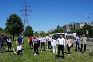 Oradea verde: 250 de arbori, plantati de voluntari, in mai multe zone din Municipiu