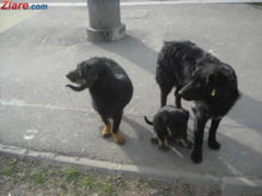 Orasul din Romania care nu-si omoara cainii maidanezi, ci ii da spre adoptie in strainatate