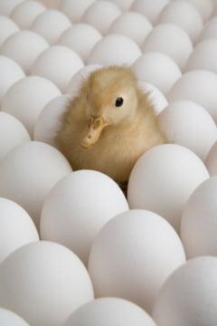 Oua foarte sanatoase pe care nu le mancam