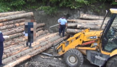 PERCHEZIEsII la firme si persoane din Vrancea, banuite de afaceri ilegale cu lemn