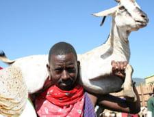 PRIMIT DEJA PE MAIL Traditii si obiceiuri pe mapamond: De Craciun, kenyenii mai instariti servesc o capra la protap!
