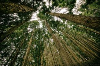 Padurarii raman, in continuare, tinte sigure in fata hotilor de lemne. Decizia criminala care i-a lasat fara arme ii va afecta inca multa vreme