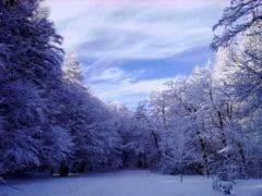 Padurea Trivale va fi desemnata rezervatie naturala