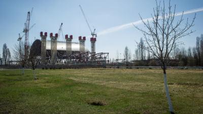 Padurea zombi de la Cernobil - copacii morti care refuza sa dispara
