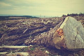 Padurile de pe jumatate de milion de hectare pot fi taiate oricand: Vom avea nevoie de 5 miliarde de euro si 500 de ani sa le inlocuim!