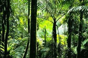 Padurile tropicale salveaza planeta de 20% din emisiile de dioxid de carbon