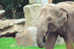 Panica din cauza elefantilor: Oamenii si-au construit case in copaci de frica lor