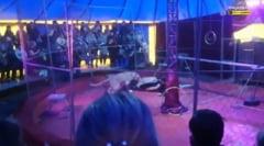 Panica la un spectacol de circ, in Rusia. Un barbat a fost atacat de un leu si a ajuns la spital VIDEO
