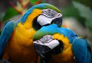 Papagalii: ingrijire corecta si semne de boala - Ce spune veterinarul