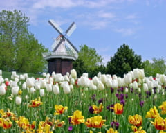 Paradisul olandez: De ce prefera firmele tara lalelelor?