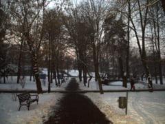 Parcul Central din Sfantu Gheorghe a scapat de ciori