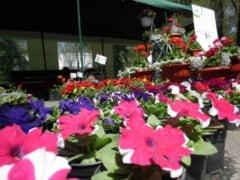Parfum de primavara la Festivalul Florilor