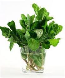 Parfumeaza aerul din casa cu plante aromate