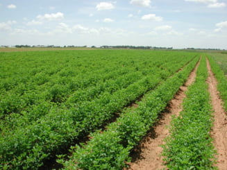 Parteneriat nonguvernamental pentru o Politica Agricola Echitabila si Sustenabila