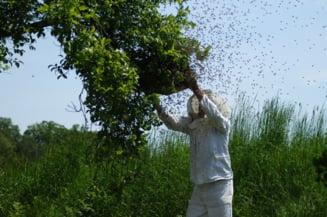 Patronul unei retele de cofetarii din Focsani, ucis de intepaturile de albine