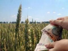 Pentru 8.000 de hectare inca nu s-au depus cereri de subventii la APIA