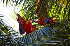 Pentru a supravietui perioadelor de seceta, pasarile tropicale si-au limitat activitatea de reproducere