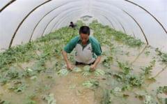 Pepenii din Dabuleni si rosiile din Matca, distruse de inundatii
