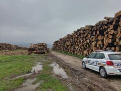 Perchezitii ale Politiei la Esibana pentru depistarea taierilor ilegale de arbori