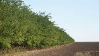 Perdele forestiere pentru zeci de hectare de teren din Teleorman