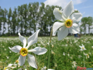 Performanta pentru agricultura romaneasca: In ce domenii suntem pe primul loc in UE