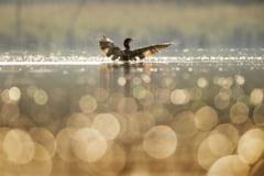 Peste 100 de specii ar putea disparea din cauza poluarii fonice