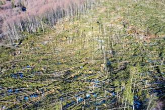 Peste 110.000 de hectare de paduri au fost distruse de fenomenele meteo extreme de la inceputul lui februarie (Foto)