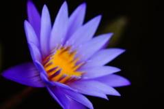 Peste 2.000 de specii de plante descoperite: Printre ele, cinci tipuri de ceapa