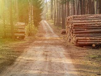 Peste 3.300 de copaci taiati ilegal in Muntii Rodnei: Prejudiciul depaseste un milion de lei. A fost sesizat Parchetul