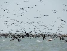 Peste 3.500 de animale din Delta Dunarii, in pericol sa fie exterminate de autoritati