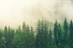 Peste 43 de milioane de hectare de padure au fost distruse din 2004
